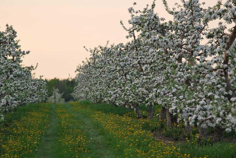 TK Ferri Orchards