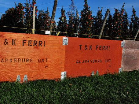 TK Ferri Orchards – the Blue Mountains