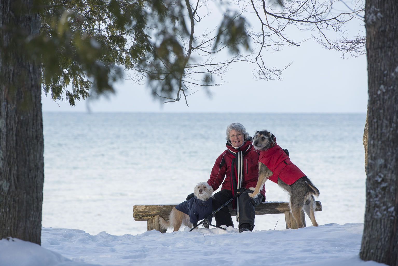 Pet-Friendly Places - South Georgian Bay Tourism