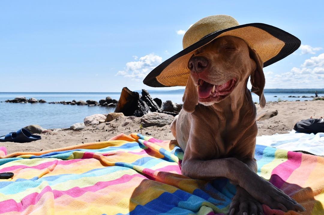 Pet Friendly Places South Georgian Bay