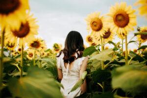 Sunflower Experience