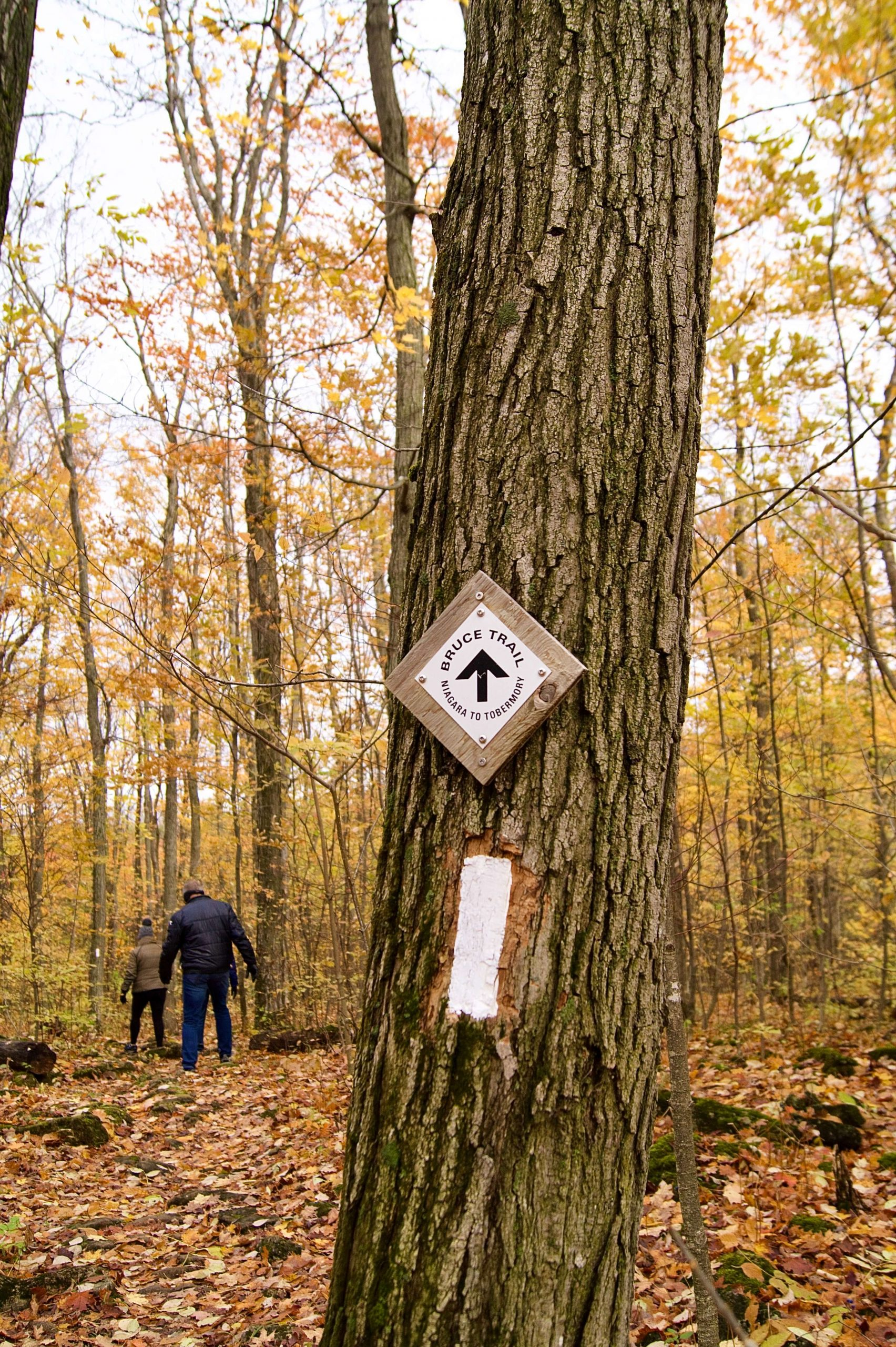 Bruce Trail - Nottawasaga Lookout Section in the fall