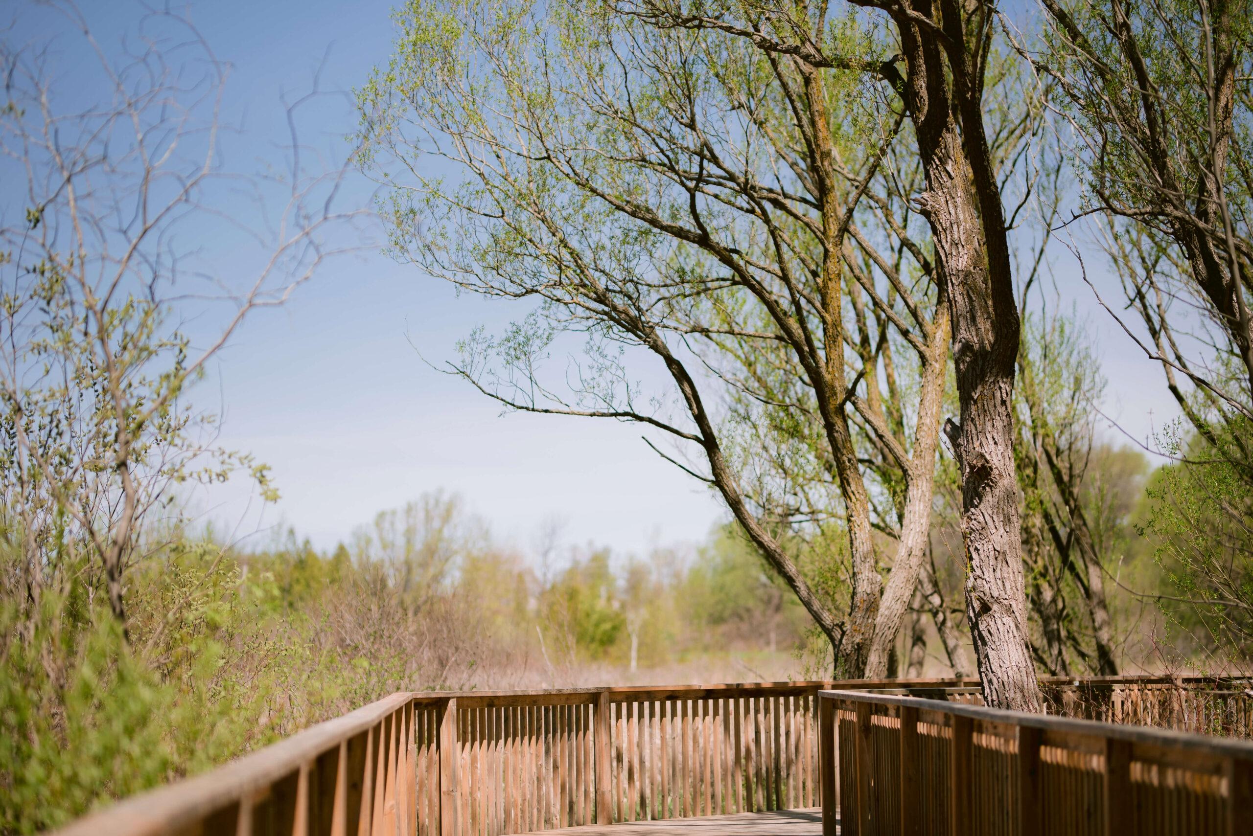 Collingwood Trails