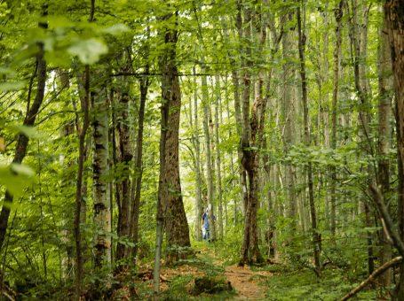 Creemore Nature Preserve
