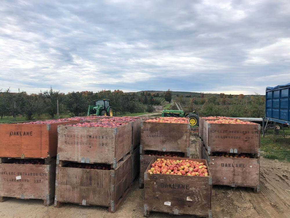 oaklane orchards